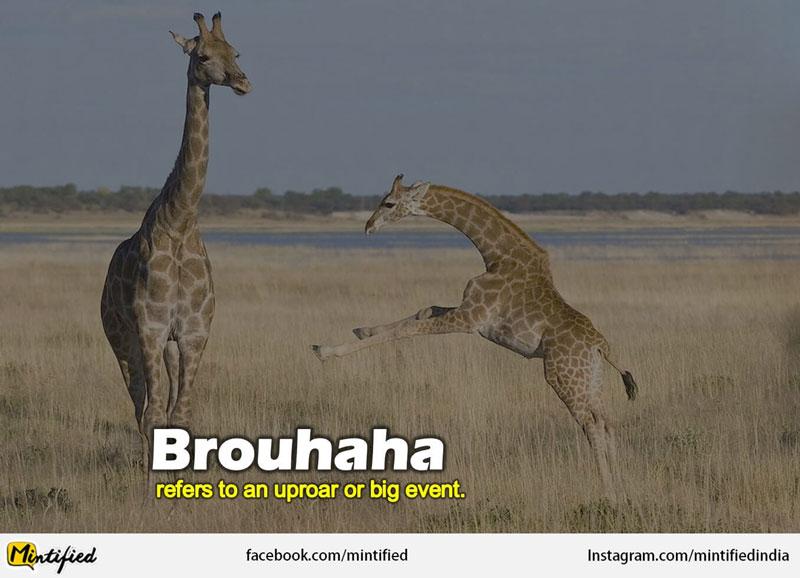 Crazy English Words Like Brouhaha