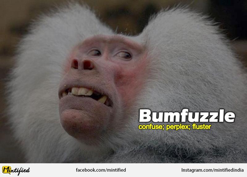 Crazy English Words Like Bumfuzzled