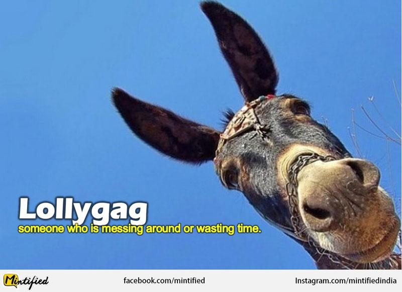 Lollygag Crazy english Words
