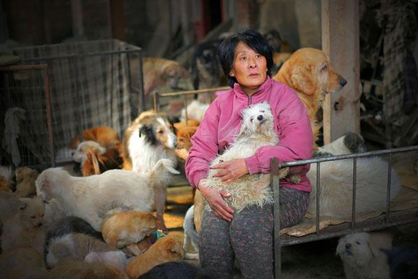Yang Xiaoyun rescued 100 dogs