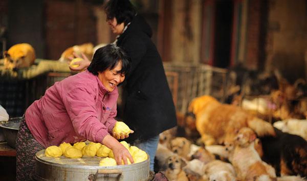 Yang Xiaoyun Save 100 Dogs