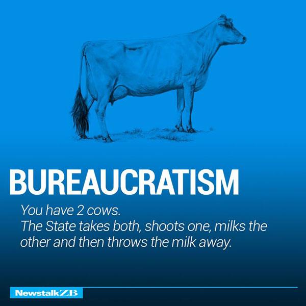 Two Cow Explaining Bureaucratism