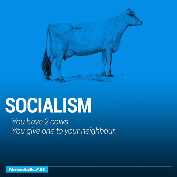 Two Cow Explaining socialism