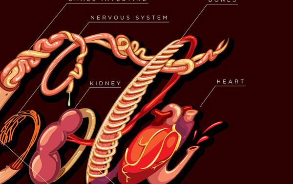 Coca cola honest logo with human organs